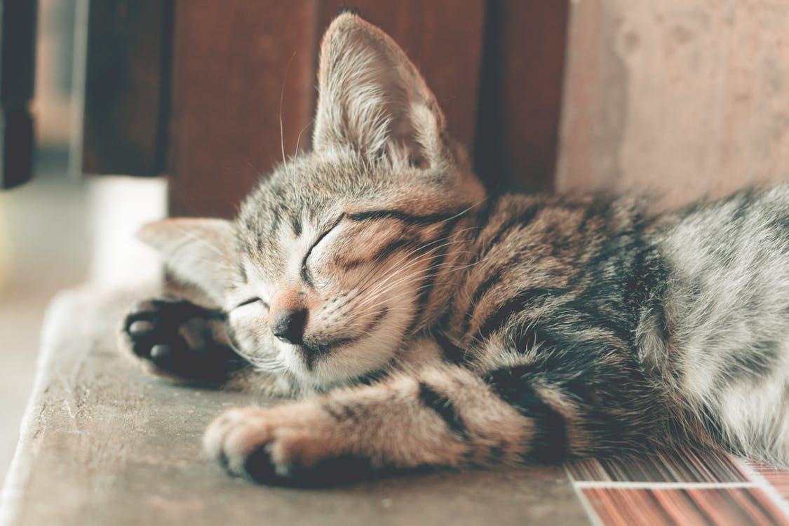 かわいい猫の寝顔